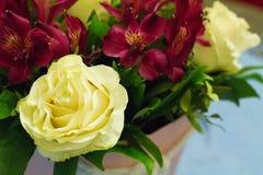 Wit nam gecombineerd met de bloemen van Bourgondië toe royalty-vrije stock afbeeldingen