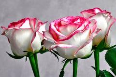 wit nam met rode en roze randen op een grijze achtergrond toe stock fotografie