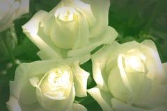 Wit nam voor textuur of achtergrond toe royalty-vrije stock foto