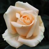 Wit-oranje nam toe Stock Foto's