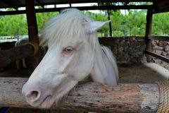 Wit paard stock fotografie