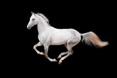 Wit paard dat op zwarte wordt geïsoleerdw Stock Foto's