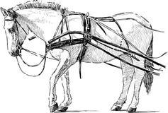 Wit paard in de uitrusting Stock Fotografie