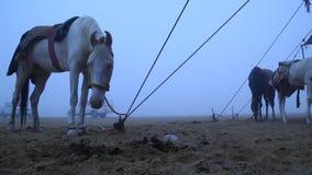 Wit Paard in de woestijn stock videobeelden