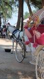 Wit paard die het paardvervoer trekken Royalty-vrije Stock Foto's