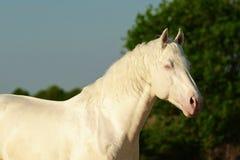 Wit paard die onder groene bomen lopen royalty-vrije stock foto