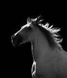 Wit paard die zich in dark bewegen Stock Foto's