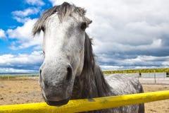 Wit paard dierlijk beeld royalty-vrije stock foto's