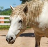 Wit paard in doosbox dichtbij de heuvel Royalty-vrije Stock Fotografie