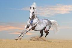 Wit paard met blauwe hemelachtergrond royalty-vrije stock afbeeldingen