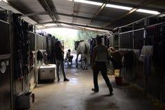 Wit Paard met Jonge Jockey en Bewaarders, Stal, Sporten Stock Afbeelding
