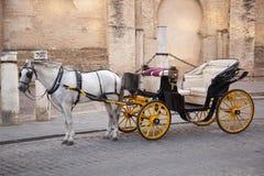 Wit Paard met Vervoer. Sevilla. Spanje Stock Afbeeldingen