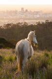 Wit paard met wilde bloemen en stadsachtergrond Royalty-vrije Stock Afbeeldingen