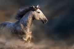 Wit paard in motie Stock Fotografie