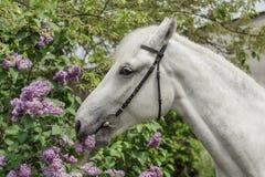 wit paard op de struikachtergrond stock afbeeldingen