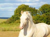 Wit paard op een achtergrond van bewolkte hemel stock foto's