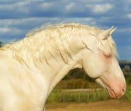 Wit paard op een achtergrond van de hemel royalty-vrije stock foto's