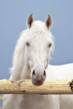 Wit paard op een donkere hemel royalty-vrije stock foto