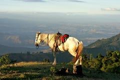 Wit paard op een heuvel dichtbij de Vulkaan van de stadspacaya van Guatemala Royalty-vrije Stock Fotografie