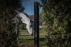 Wit paard op groen die gebied door de omheining wordt geschoten royalty-vrije stock afbeelding