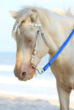 Wit paard op het strand Royalty-vrije Stock Foto
