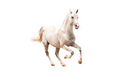 Wit paard op wit Stock Afbeelding
