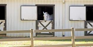 Wit Paard in Stal royalty-vrije stock afbeeldingen