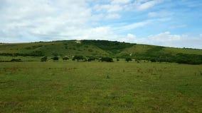 Wit paard van dorpLitlingtonin theCuckmerevalleiinâOost-Sussex, Engeland,  Stock Foto