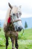Wit paard in vlekken, bergen op de achtergrond Royalty-vrije Stock Foto's