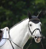 Wit paardhoofd openluchtGelderland 2012 Stock Fotografie