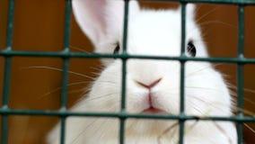 Wit pluizig konijn achter de kooi stock videobeelden