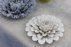 Wit porseleinmadeliefje, rgb adobe stock afbeelding