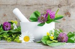 Wit porseleinmortier met het helen van bloemen van klaver en kamille Kruidengeneeskunde, organische eigengemaakte schoonheidsmidd Royalty-vrije Stock Afbeelding