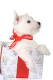 Wit puppy met de doos van de ribboningift stock foto
