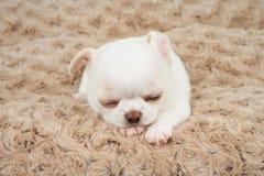 Wit puppy op mat Royalty-vrije Stock Afbeeldingen