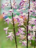 Wit Purper Spaans Moss Flowers Hanging stock fotografie