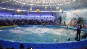 WIT-RUSLAND, MINSK - 2014: De dolfijnen tonen in dolphinarium stock footage