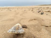 Wit Shell op een zandig strand Royalty-vrije Stock Foto's