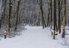 Wit sneeuw bosdielandschap, weg in het hout in witte sneeuw, Europees bos wordt behandeld van Nederland stock foto's