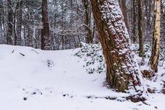 Wit sneeuw boslandschap, witte die heuvel en boomboomstam in witte sneeuw, het Nederlandse hout wordt behandeld van Nederland royalty-vrije stock foto