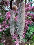 Wit Spaans mos in het park voor achtergrond stock afbeeldingen