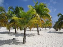 Wit strand met palmtree Stock Afbeeldingen