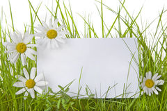 Wit Teken onder Gras en Daisy Flowers Royalty-vrije Stock Afbeeldingen
