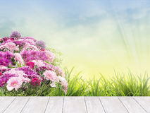 Wit terras met de bloemen en het gras van de bloembedzomer Stock Afbeelding
