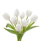 Wit tulpenboeket Stock Foto