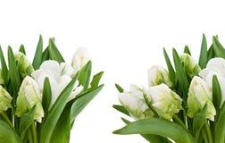 Wit tulpenboeket Royalty-vrije Stock Fotografie