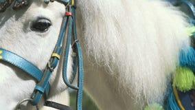 Wit weinig paard als geroepen poneytribunes in park stock videobeelden