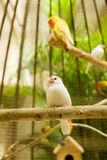 Wit Weinig Vogel Royalty-vrije Stock Afbeeldingen