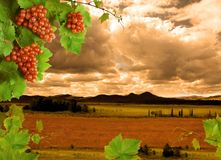 Wit wijn en zonsonderganglandschap Stock Afbeeldingen