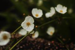 Wit wild bloemenbehang royalty-vrije stock afbeelding